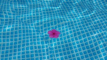 flower-404372_960_720